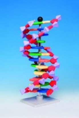 Slika Molecular model system miniDNA<sup><SUP>&reg;</SUP></sup> / RNA Kits